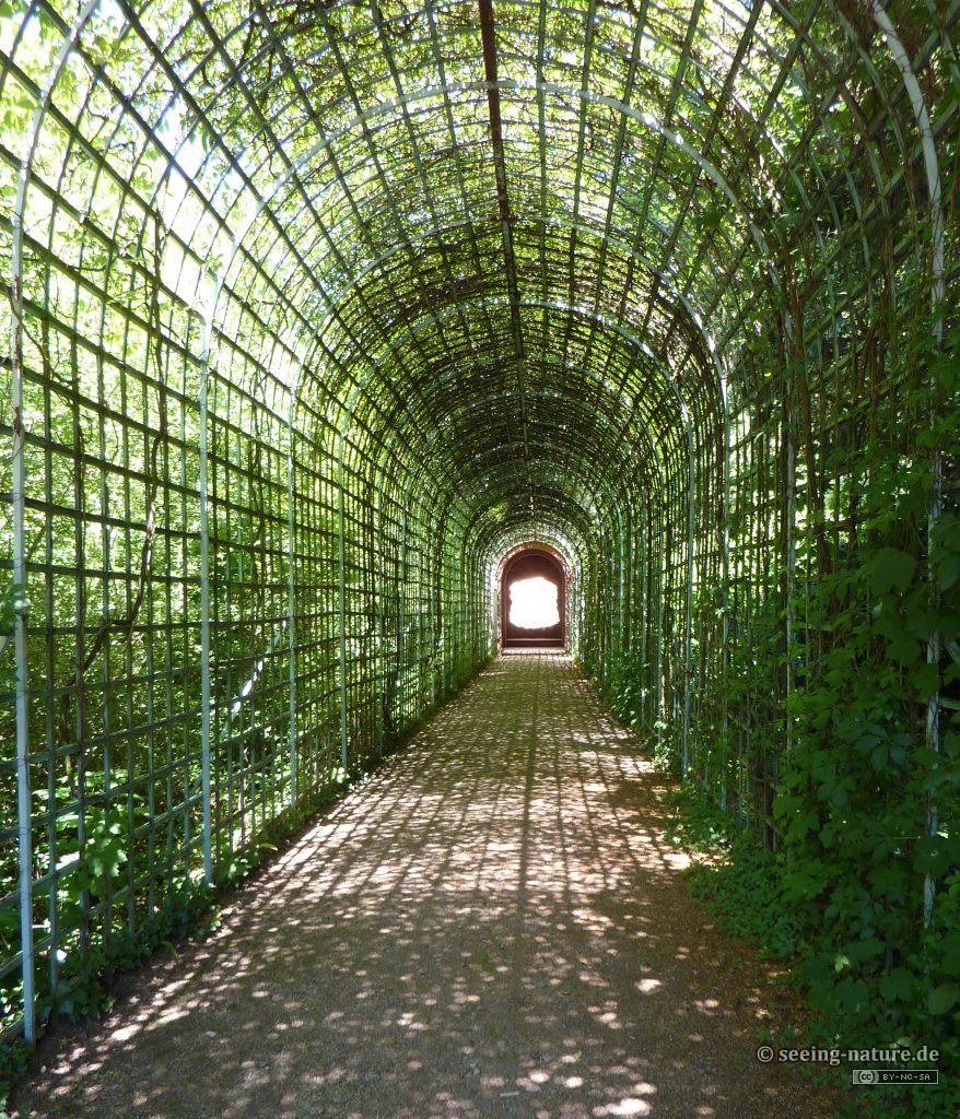 Web Tunnel