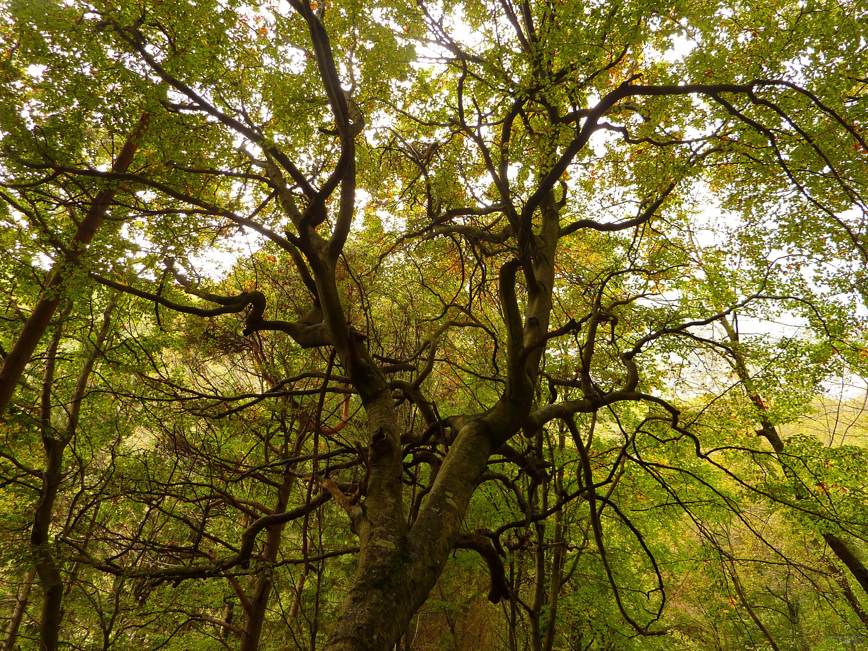 Branching Green