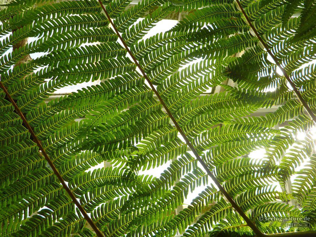 Fern Feathers