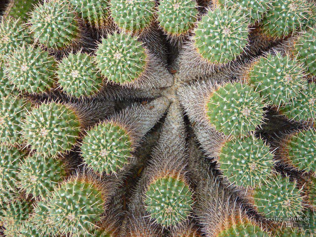Green Hedgehog