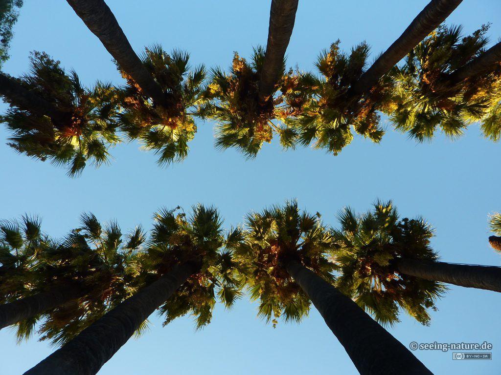 Palm Guards