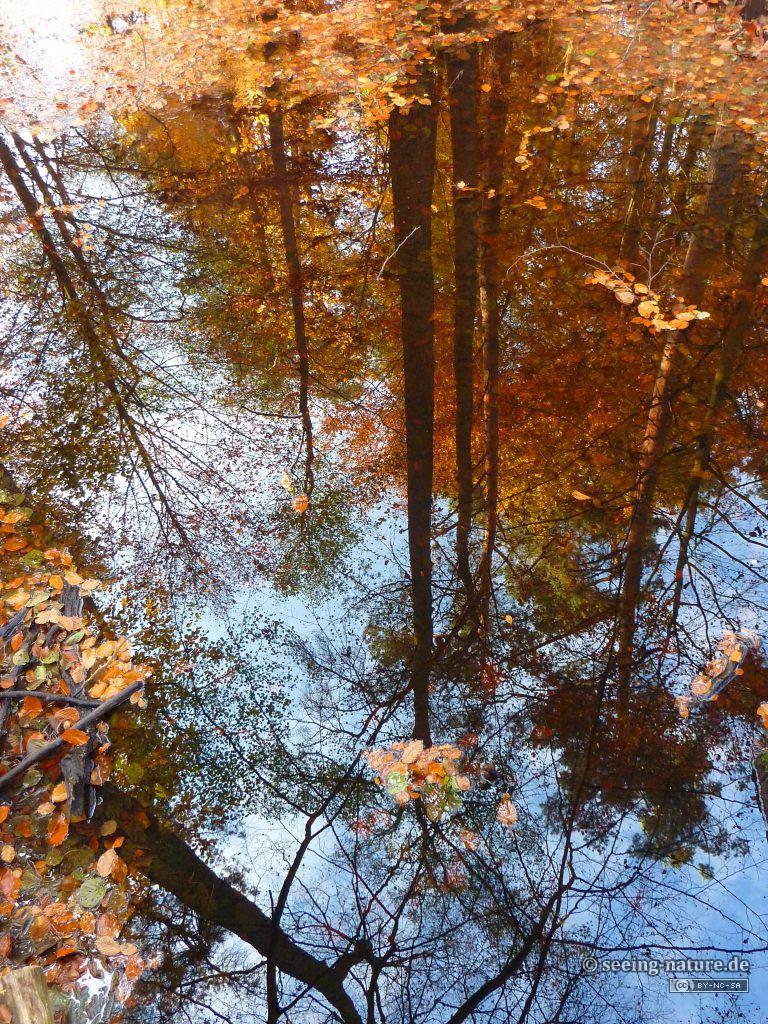 Self-Reflections