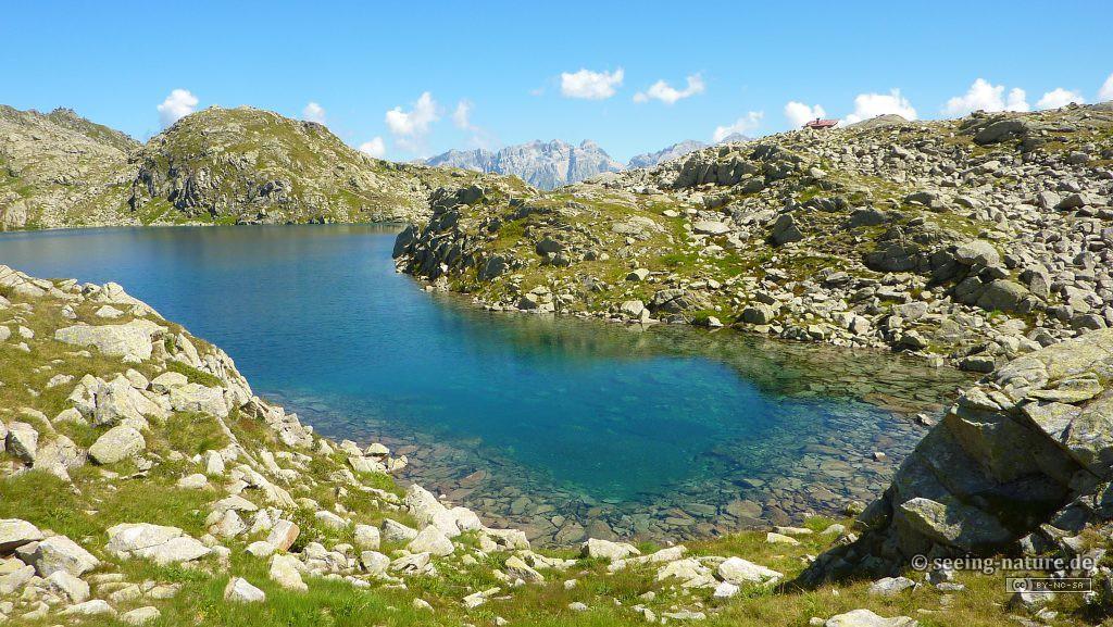 Blue Alpine Pearl / Plavi alpski biser